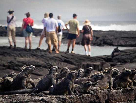 Animal encounters in the Galapagos Islands