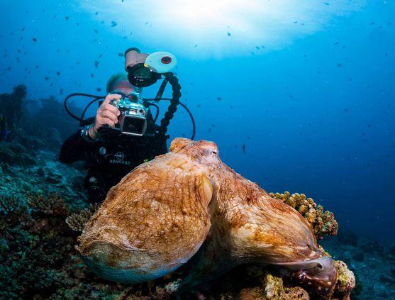 SCUBA diving in Maldives