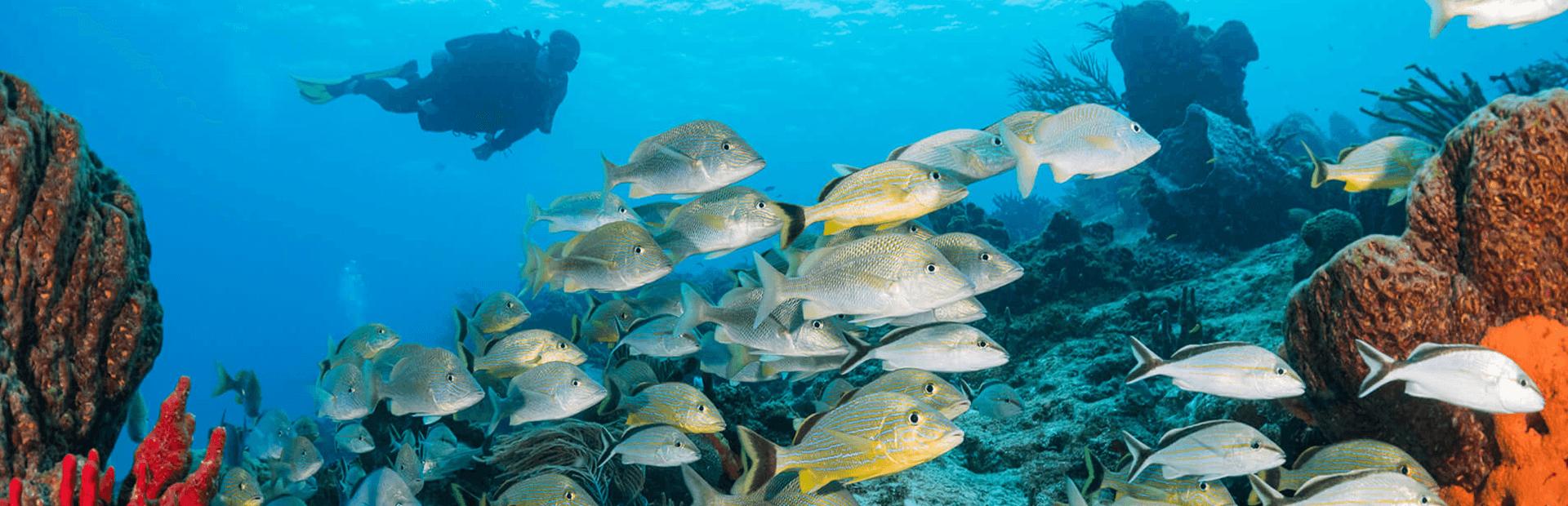9 Tips for Drift Diving in Cozumel | Caradonna Adventures