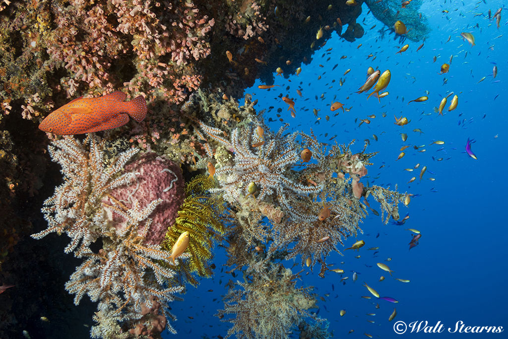 Reef Wall in Raja Ampat