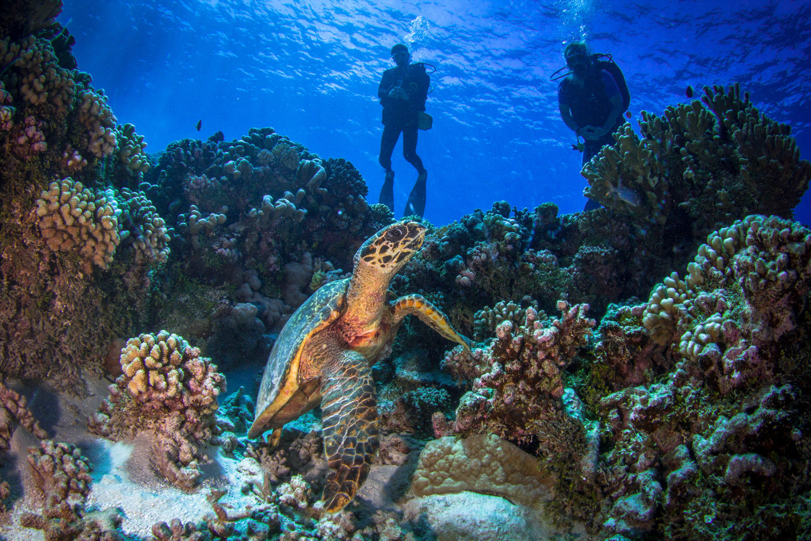The Islands of Tahiti deliver an enticing combination of topside beauty and underwater excitement.