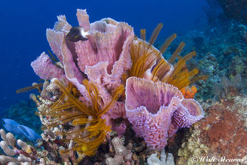 Coral reef in St. Lucia