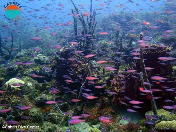 Situated in the center of Douglas Bay, this healthy reef is stunning showcase of variety in color and marine life.