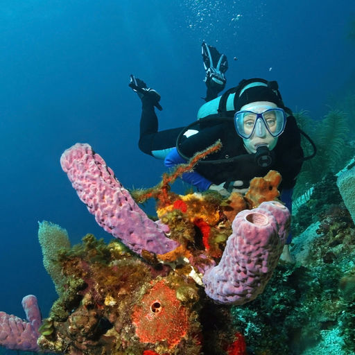 With more than 180 miles of barrier reef, hundreds of square miles of shallow reefs and three offshore atolls, Belize has ample diving variety