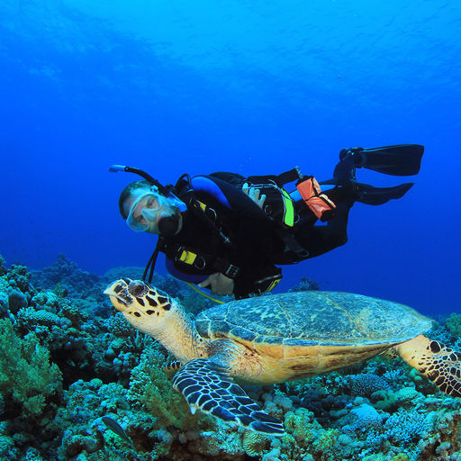 The Cozumel's reputation for healthy reefs with healthy fish populations and excellent underwater clarity is well deserved as these waters are home to more than 100 types of coral and 260-plus species of fish