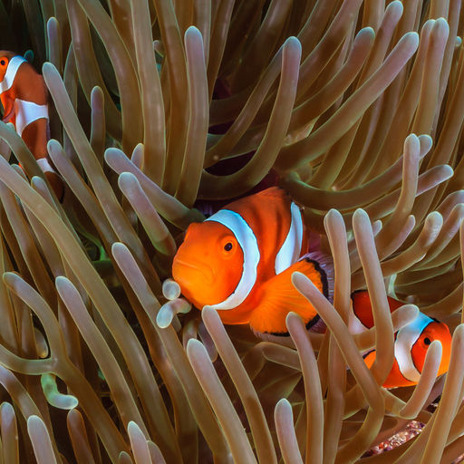 From the tiny and hidden to the biggest fish in the sea, the Philippines delivers an unrivaled variety of marine life, along with a remarkably diverse range of diving environments