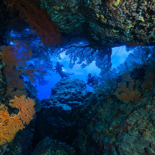 Tonga's seascapes include colorful soft coral growths reminiscent of Fiji and walls and slopes covered in hard corals. Abundant fish life and invertebrate-filled shallows round out the dive roster