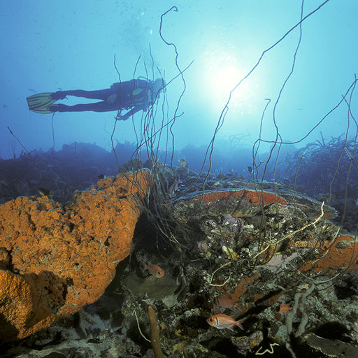 Bonaire Reefs