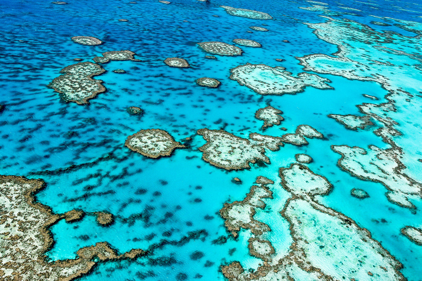Some 1,200 miles in length and encompassing more than 13,000 square miles of ocean, the Great Barrier Reef Marine Park harbors an astounding variety of marine life, including more than 1,600 species of fish
