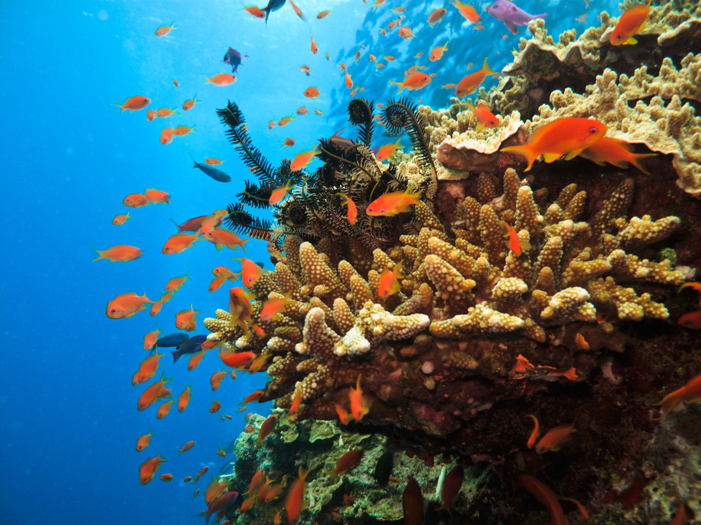 Australia's Great Barrier Reef is one of the seven wonders of the natural world, and a destination that has it all from the tiniest and most exotic marine creature to the largest fish in the sea