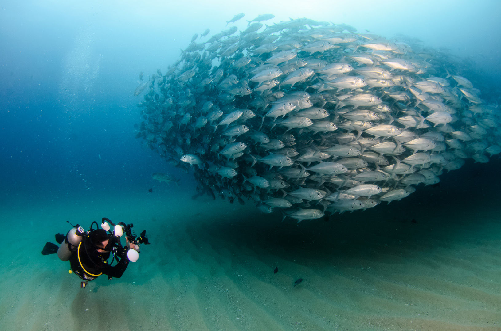 Straddling the rich waters of the Sea of Cortez, the Baja Peninsula is the launching point for some of the most electrifying where divers may be immersed in large flashing shoals of fish