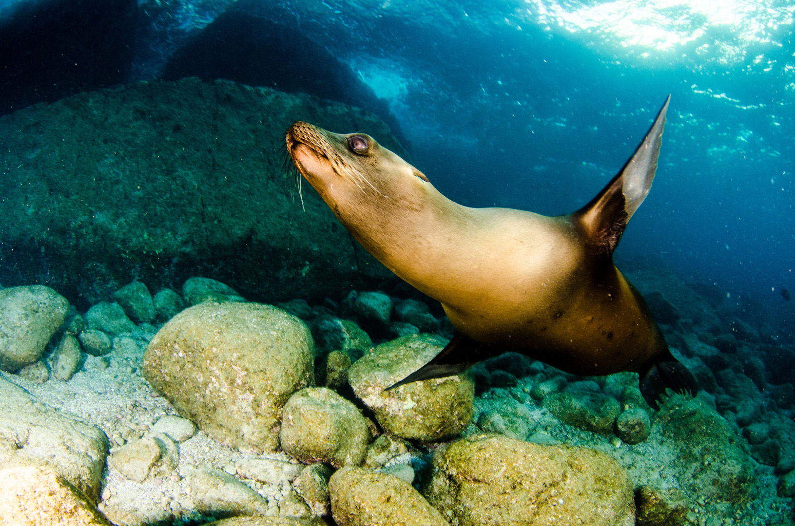 Straddling the rich waters of the Sea of Cortez, the Baja Peninsula is the launching point for big animal encounters like the sea lion