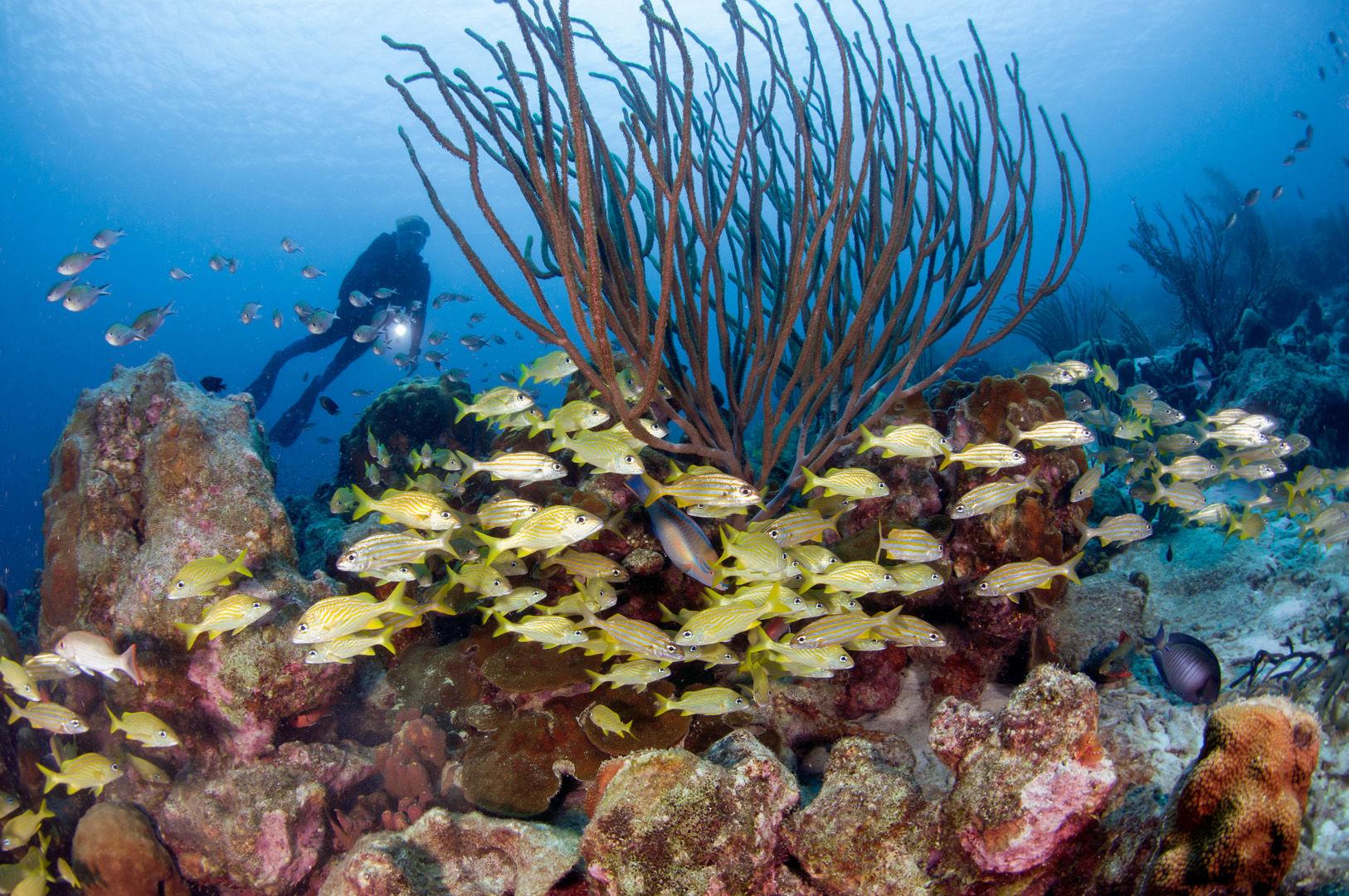 Diver exploring a reef full of life in Bonaire
