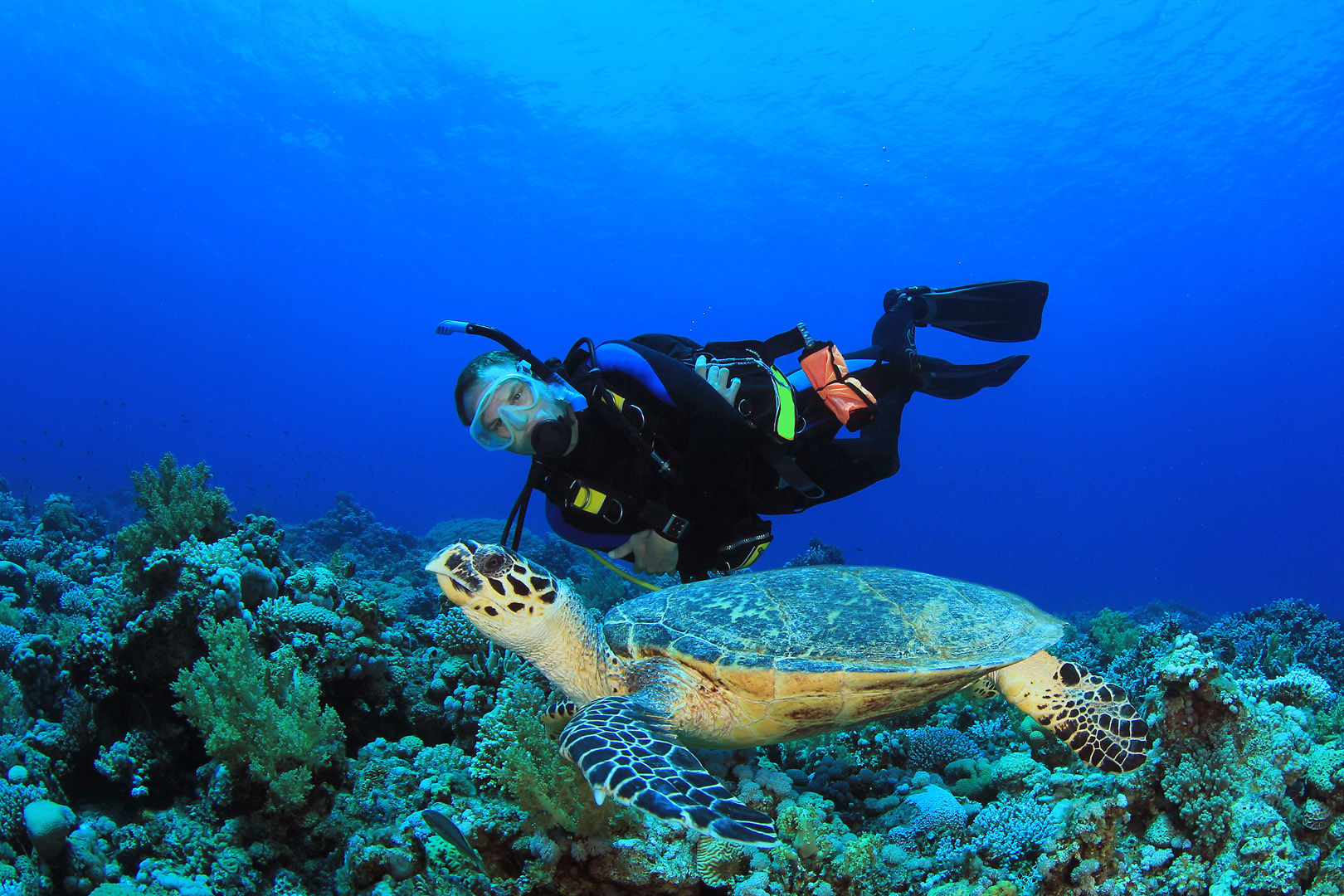 Scuba Diving In Cozumel Resorts Packages Caradonna Adventures