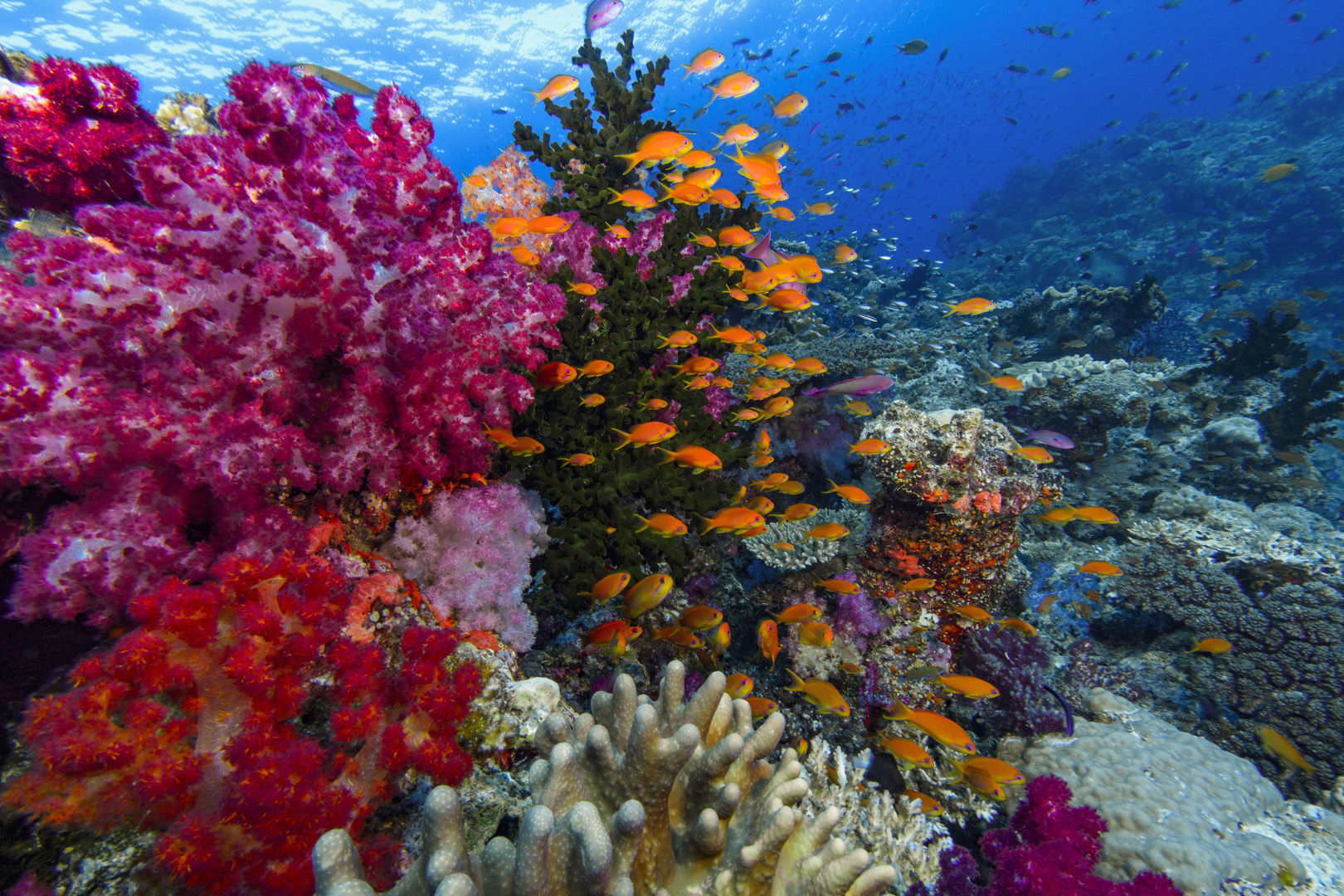 fiji dive package deals