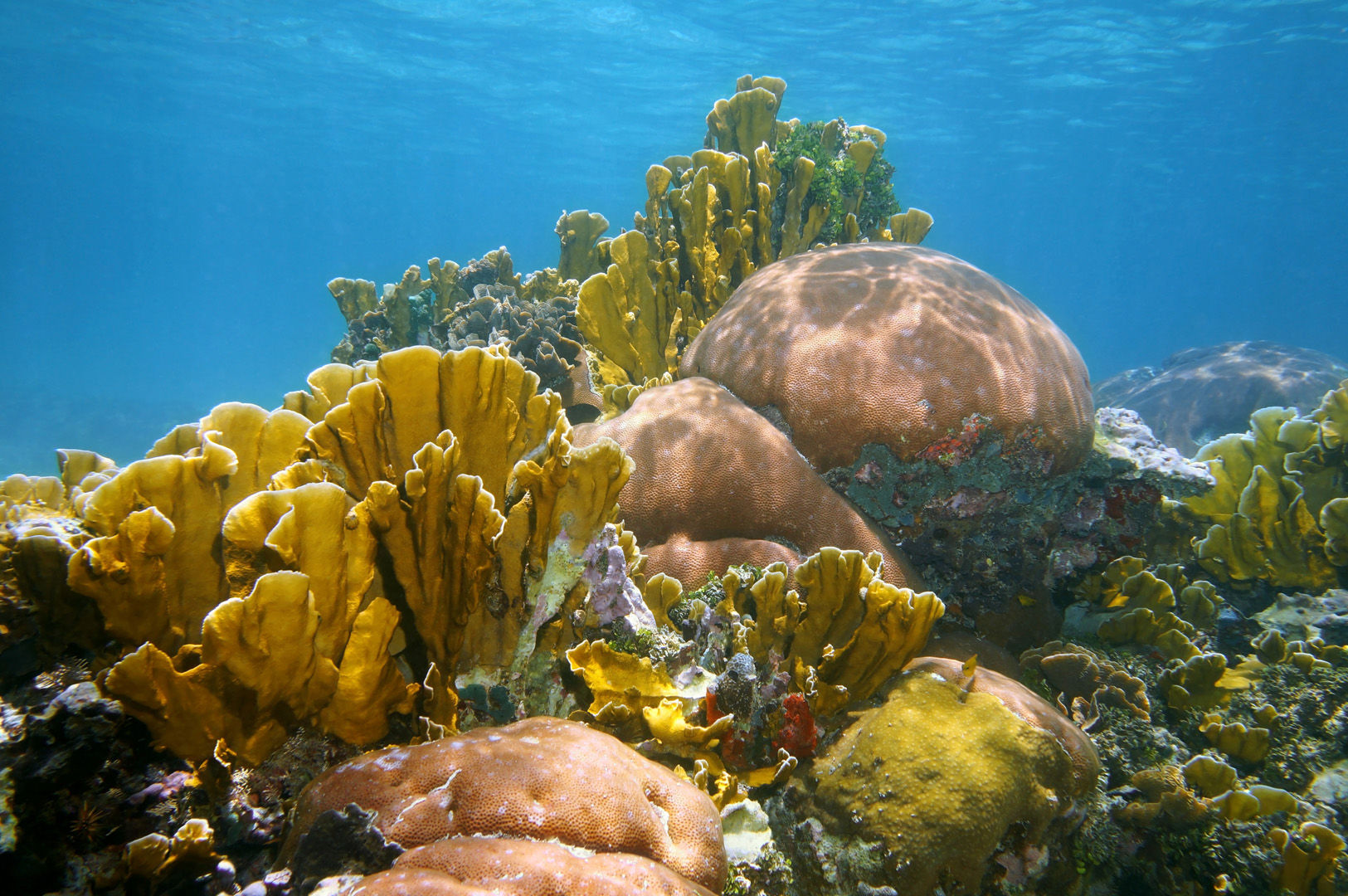 Coral reefs like these are what makes the diving in Puerto Rico interesting