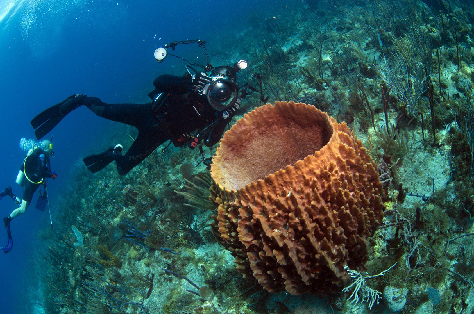 The coral reefs of St. Kitts & Nevis offer the intrepid divers many wondrous creatures like this large barrel sponge