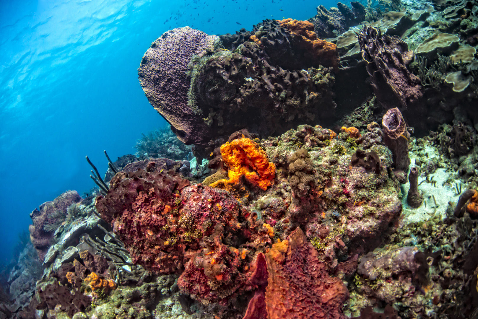 The waters of Tobago offer magnificent coral reefs to explore