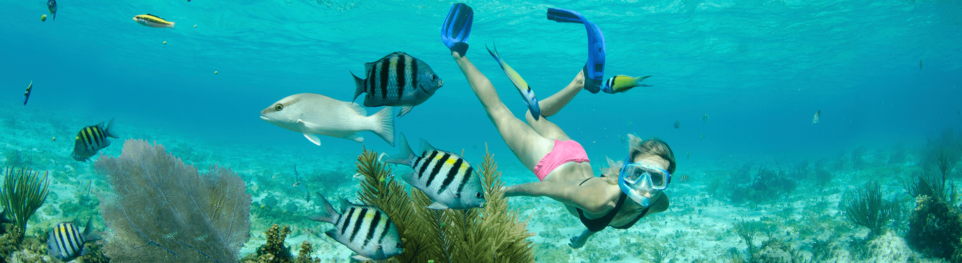 Experience some of the best snorkeling in the world thanks to the calm seas, clear water and beautiful coral reefs close to shore in the Cayman Islands.