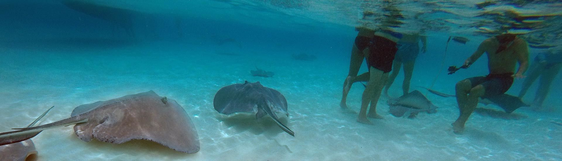 Immerse yourself in a cloud of swirling rays at Grand Cayman's Stingray City. It's the world's original stingray encounter, and it's number one with divers and snorkelers.
