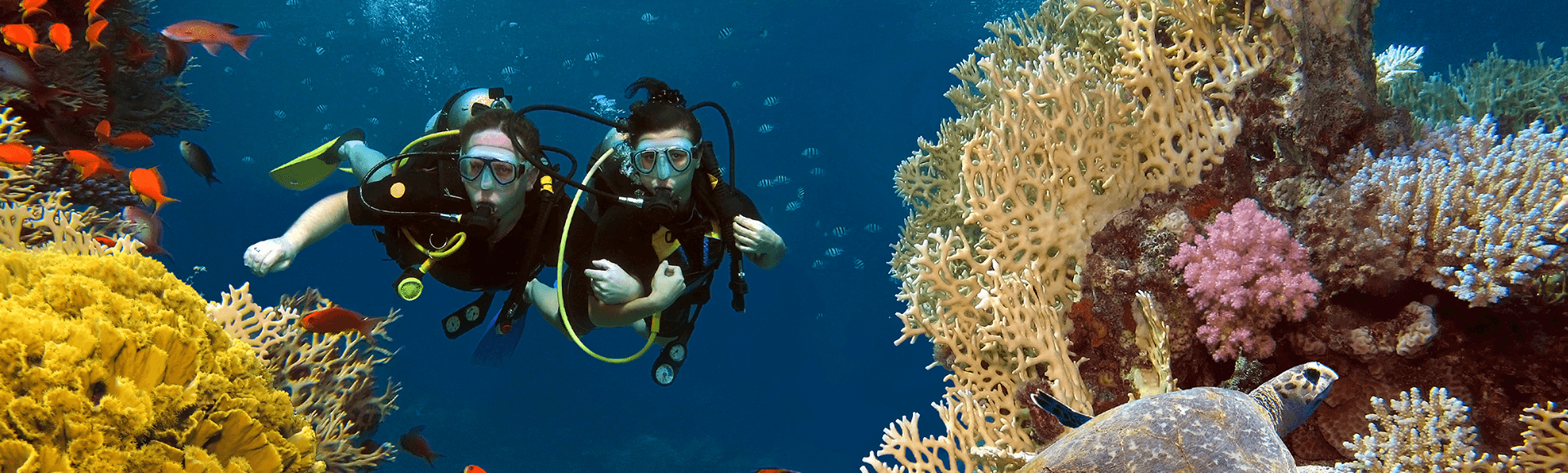 Couple diving buddy diving among coral and fish in the ocean