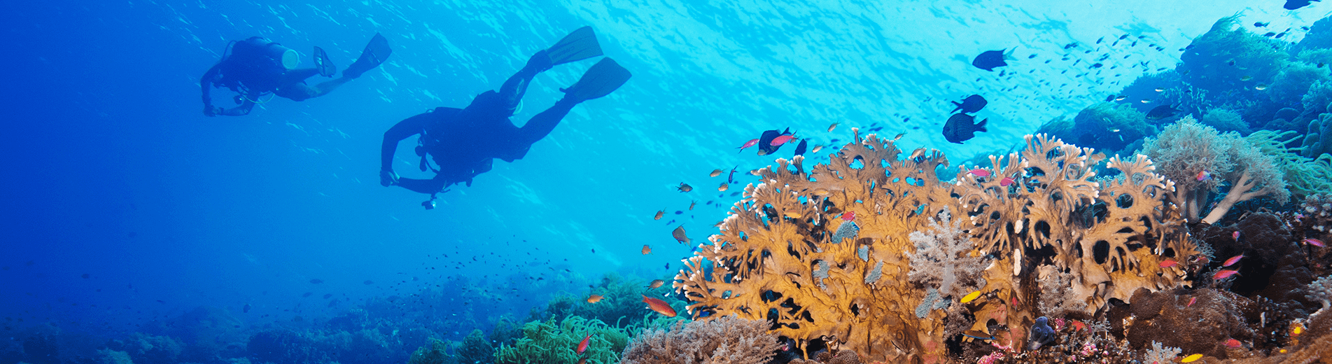 Since the 1980s revealed that the Tubbataha Reefs Natural Park in the Philippines contains no less than 600 fish species, 360 coral species, 11 shark species, 13 dolphin and whale species, and 100 bird species.