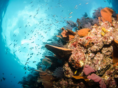 The rich waters of the Sea of Cortez will provide divers with a dazzling variety marine life