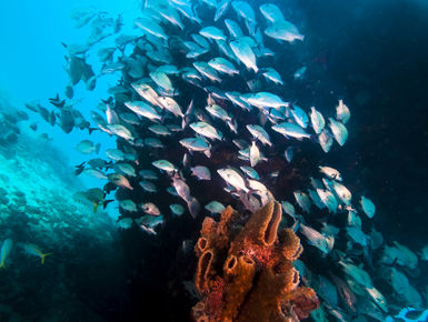 School of fish swim around the Berwyn wreck in the clear, blue waters of Barbados