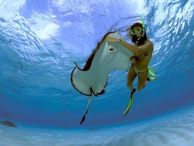 Snorkeler feeding a Southern Stingray at Stingray City on the island of Grand Cayman, Cayman Islands