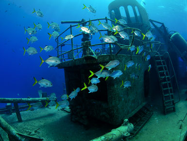 Horseyed Jacks swim around the USS Kittiwake wreck in Grand Cayman