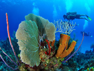 Divers exploring one the Cayman Islands many colorful reefs