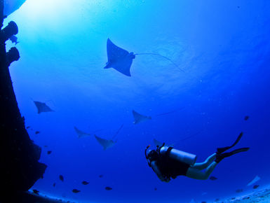 Scuba Diving In Cozumel Resorts Packages Caradonna