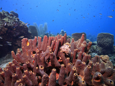 Sponges in Dominica
