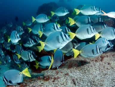 The Galapagos Islands beckon divers with a menagerie of big animal thrills and inspiring colorful marine life