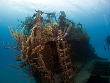 The Bay Islands of Honduras—Roatan, Utila & Guanaja— serve up a quintessential mix of Caribbean dive experiences with near shore shallows to plunging drop-offs and wrecks where divers can spend hours searching for cryptic marine life