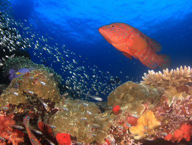 The waters of Indonesia are at the epicenter of marine biodiversity with more than 2,000 species of fish, 500-plus varieties of hard and soft coral and thousands of enigmatic invertebrates