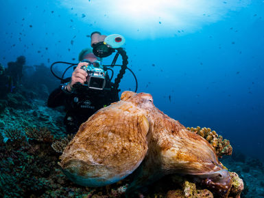 The Maldives may be a nation of coral reefs it is a place with a rich bounty of marine wildlife like this octopus creating a lifetime of diving possibilities