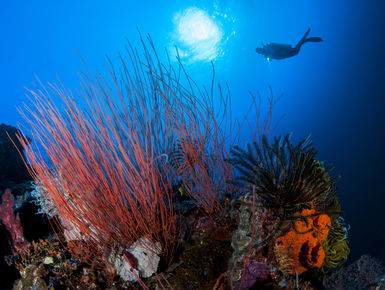 As destinations go PNG can please big animal enthusiasts, reef lovers and critter hunters alike through some of the most prolific and pristine coral growth in the world