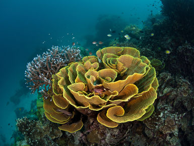 The Solomon Islands still remains one of the Pacific's best-kept secrets with a splendid diversity of marine life that thrives among the region's extensive collection of coral reefs and historic war wrecks