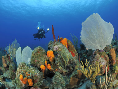 In the waters of St. Eustatius, From shallow reefs with colorful marine life to dramatic labyrinths and deep walls, there is something for divers in St. Eustatius