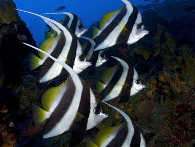 Tahiti is more than a South Pacific paradise above water; divers will revel in just how clear its waters are along with its occupants vivid coloration and hues