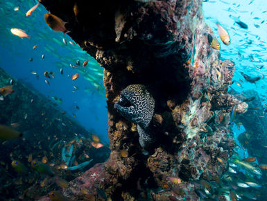 From shallow, sunlit reefs to current-washed pinnacles, wrecks, deep walls, caverns, and grottoes with marine life in an impressive array of types and sizes from tiny invertebrates to bus-sized whale sharks making Thailand a world-class dive destination