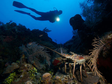 The coral reefs of Turks & Caicos offer the intrepid divers many wondrous creatures like this spiny lobster
