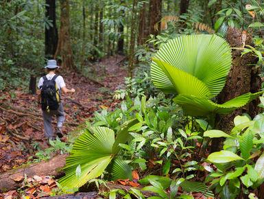 Hiking in Malaysia