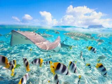 Deemed a true South Pacific paradise, divers have ample opportunities to see many favorites such as loads of beautiful reef fish to friendly sting rays