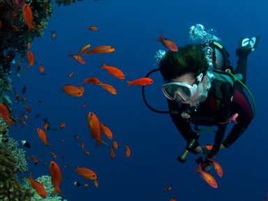 SCUBA diving in the Solomon Islands